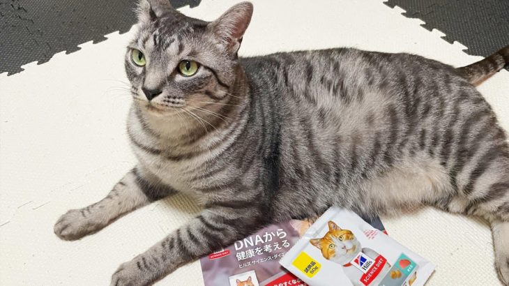 Amazonさんからダイエットをオススメされた猫A cat recommended by Amazon for a diet